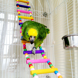 Ladder Bird Toys for Bird Parrot Macaw African Greys Budgies Cockatiels Parakeet Hamster Rat Crawling Rainbow Bridge Wooden Cage Funny Perch Trainning Swing Toys
